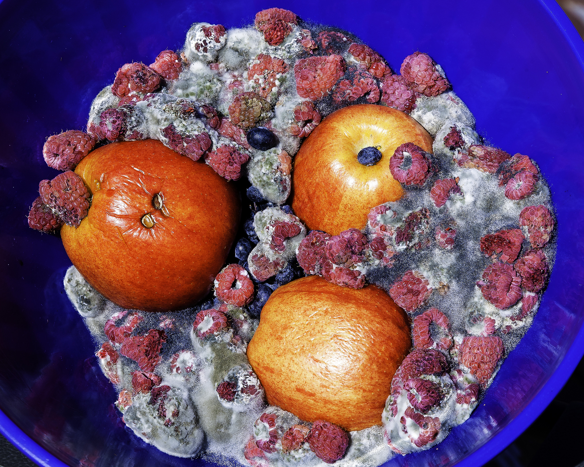 Food Waste. Fruit rotting in the bowl.